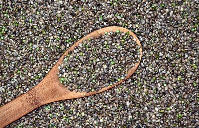 Semínka konopí se dají běžně konzumovat