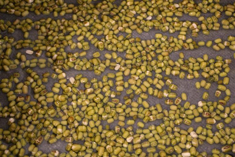 zelené mungo fazolky